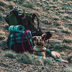 Survival Dog